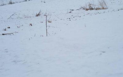 Winter Has Hit the Farm