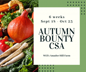 Autumn Bounty CSA
