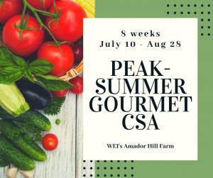 Peak Summer CSA